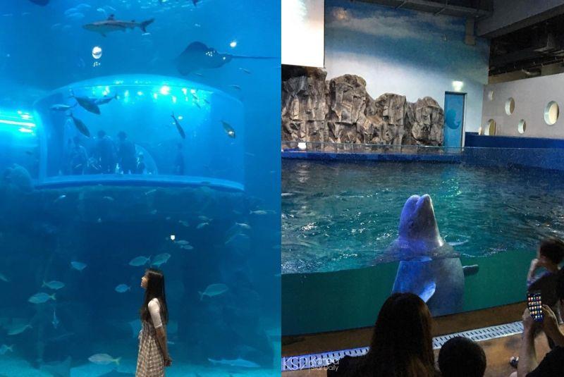 【麗水必玩】《藍色大海的傳說》拍攝地:麗水水族館與小白鯨相遇吧!