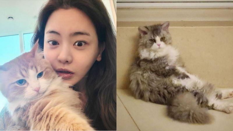 这位女艺人被全韩国「猫奴」羡慕!只因猫咪长得太美了
