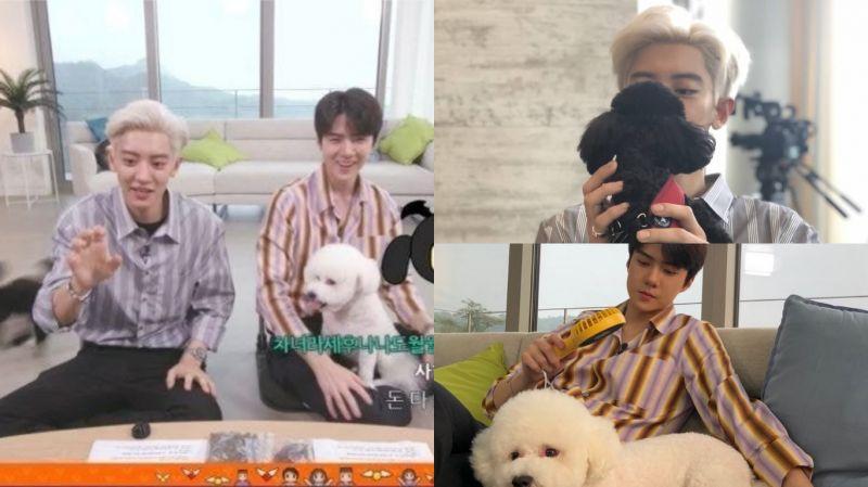 寵物的性格真的隨主人了!EXO-SC(世勳&燦烈)帶著萌寵VIVI、多芬出演《MLT2》