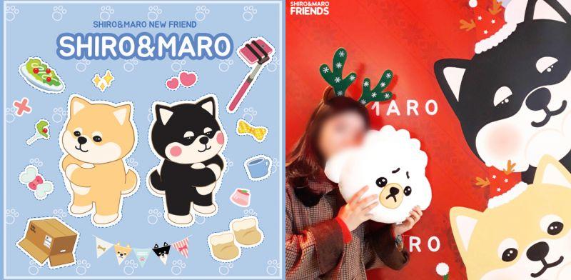 韓國超人氣柯基SHIRO & MARO有新朋友啦,現在還在新村和大家見面呢!