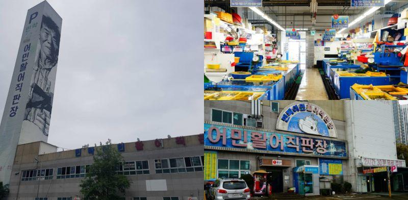 「夏天想在釜山吃到新鲜的生鱼片来这就对!」釜山海产市场推介:民乐洞活鱼直卖场