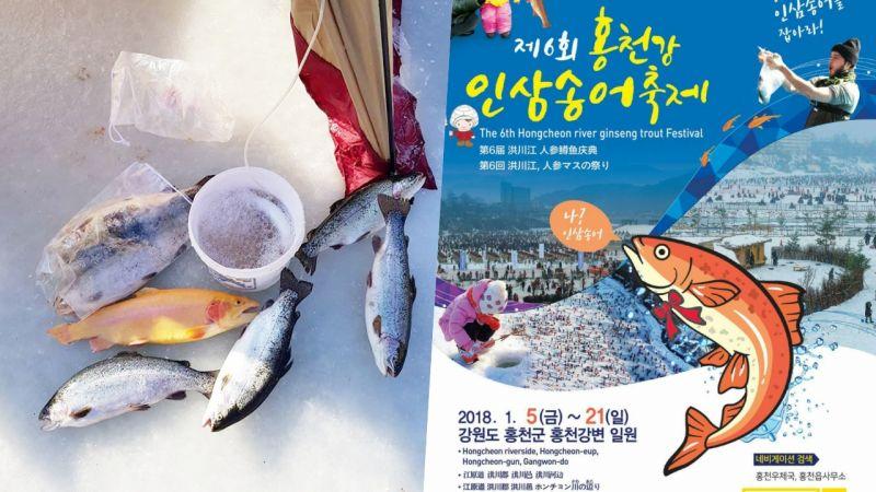 【江原道必玩】1月去韓國哪裡玩? 三大冰釣慶典不容錯過! (二)洪川江人蔘鱒魚慶典
