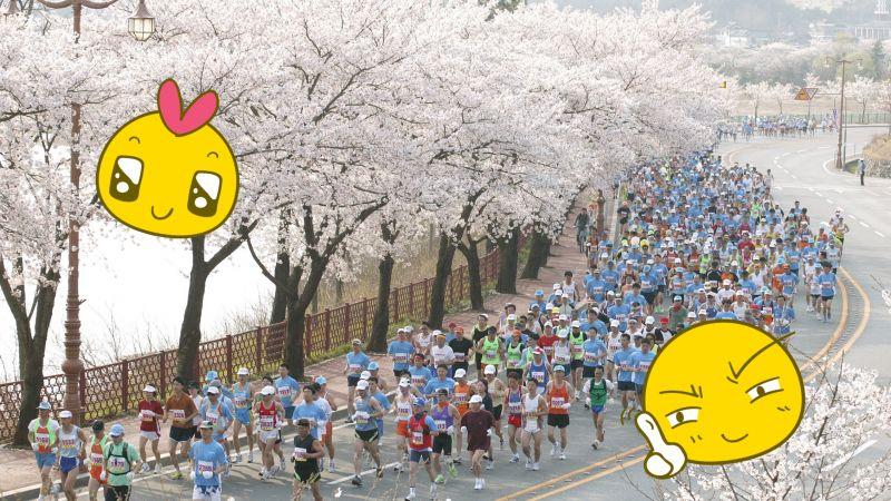 跑馬又能賞櫻花! 慶州櫻花馬拉松大會開始報名啦~