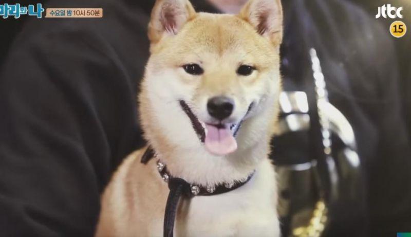 《瑪莉和我》來自YG的寵物委託 狗狗主人是?