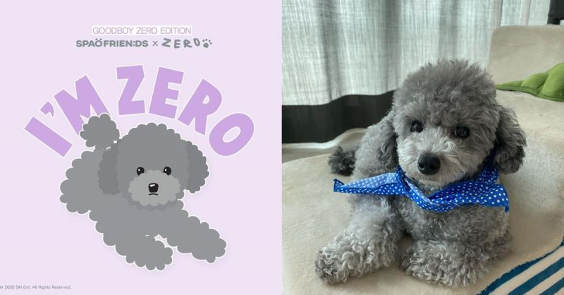 SPAO推出太妍愛犬ZERO的限定版商品:8月5日上市!