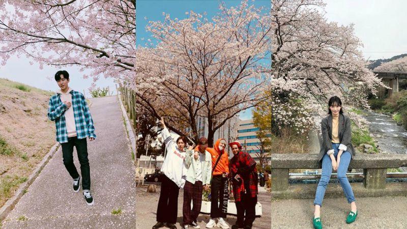 很多明星都和樱花拍照打卡了,大家也赏樱花了吗?