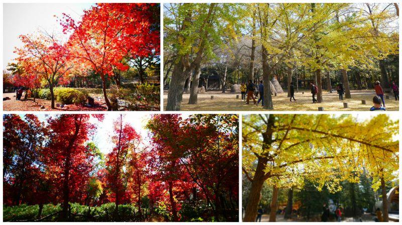 「秋天要來了~」秋日首爾賞楓首選—歡迎到南怡共和國!