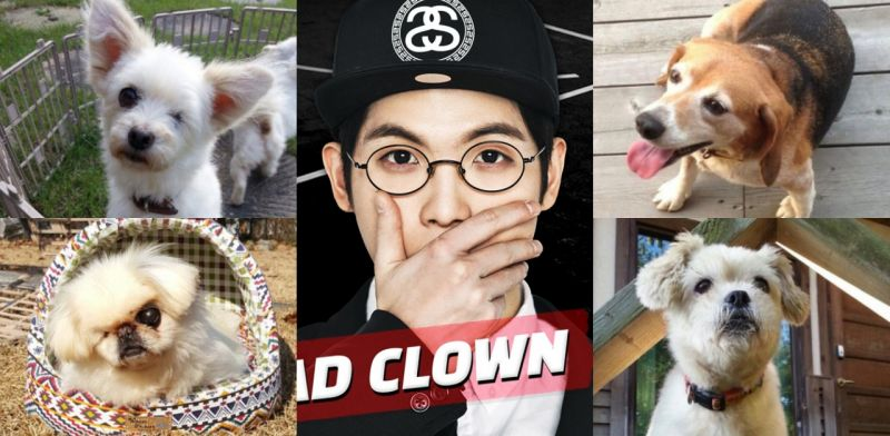 这些狗狗都是Mad Clown救回来的!化妆品公司实验犬、东大门流浪犬