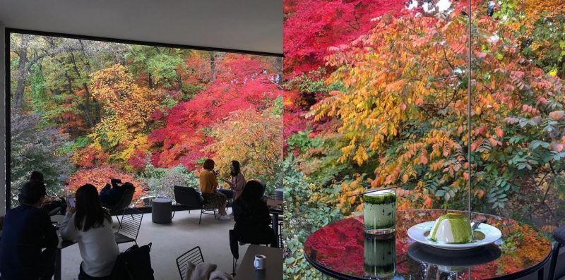 快點抓住秋天最後的尾巴:在楓樹底下喝杯咖啡吧!