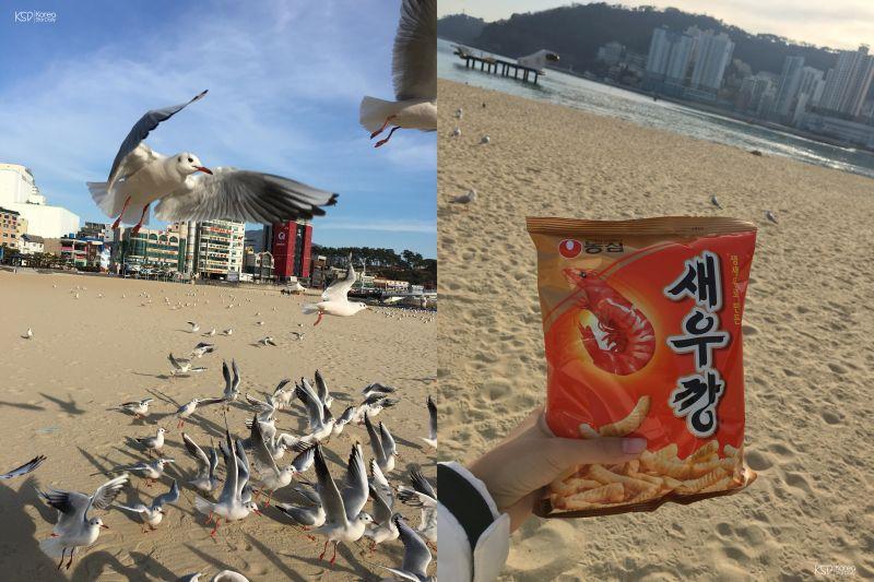 【釜山景点】釜山海边最浪漫的活动之一?一起来喂海鸥吧~