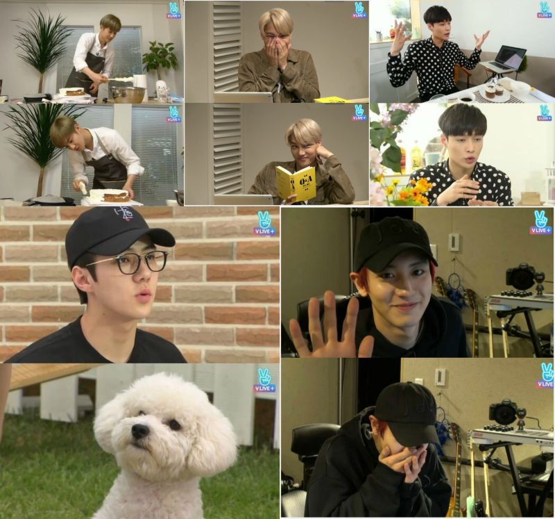 小狗、蛋糕、小說、工作室和午餐時間…來看看EXO的近況吧!