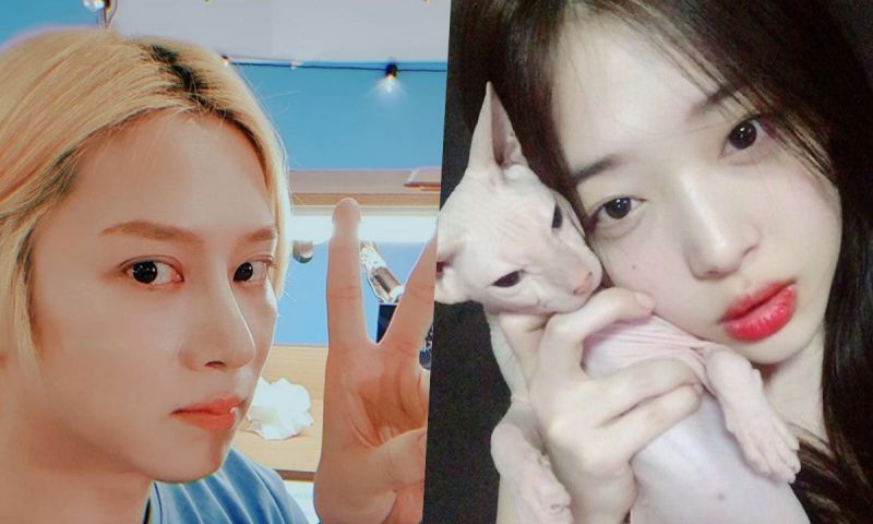 Super Junior金希澈疑似收養Sulli生前愛貓?直播時有粉絲發現無毛貓的身影!