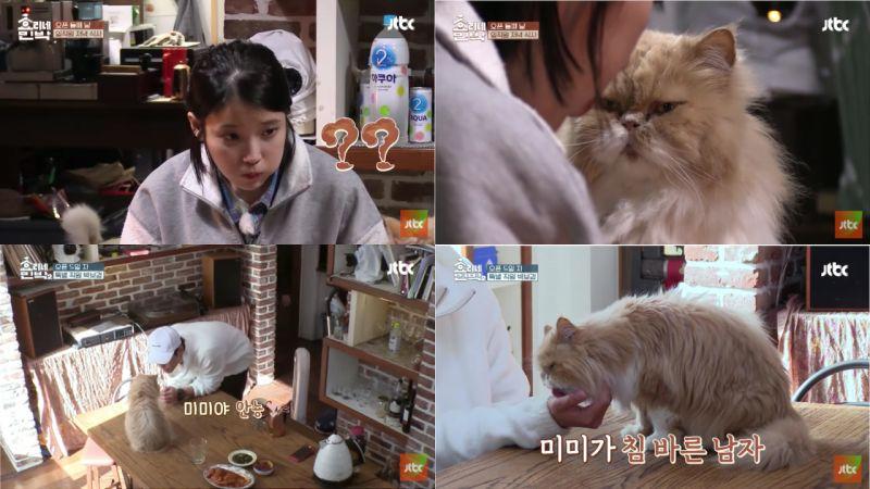 《孝利家民宿》的猫咪美美遇到IU、朴宝剑反应大不同!网友:「真的太可爱啦!」