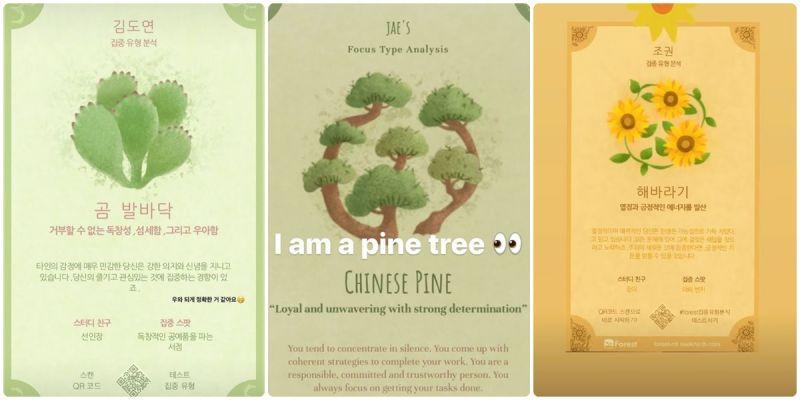 來自台灣的《種出你的專注花語》心理測驗在韓爆紅,連愛豆們也在玩呀