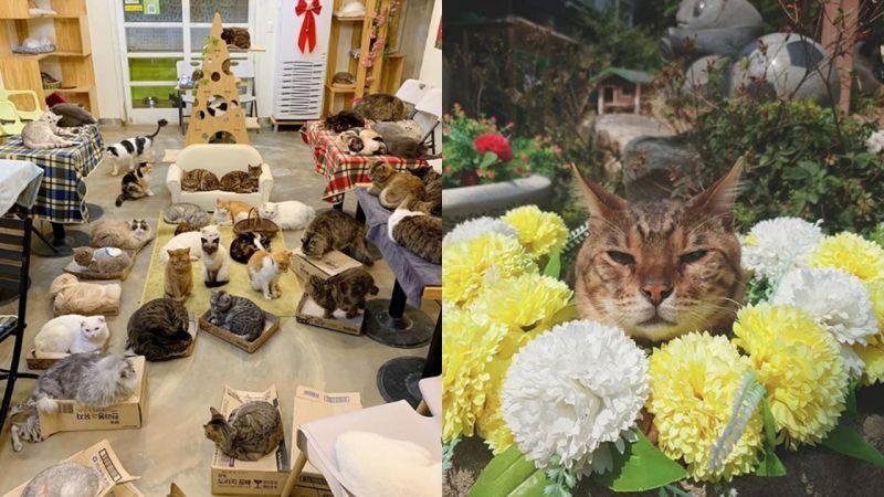 在韓國首爾有101隻的巨型吸貓天堂咖啡廳!【貓咪庭院】真的會上癮啊~