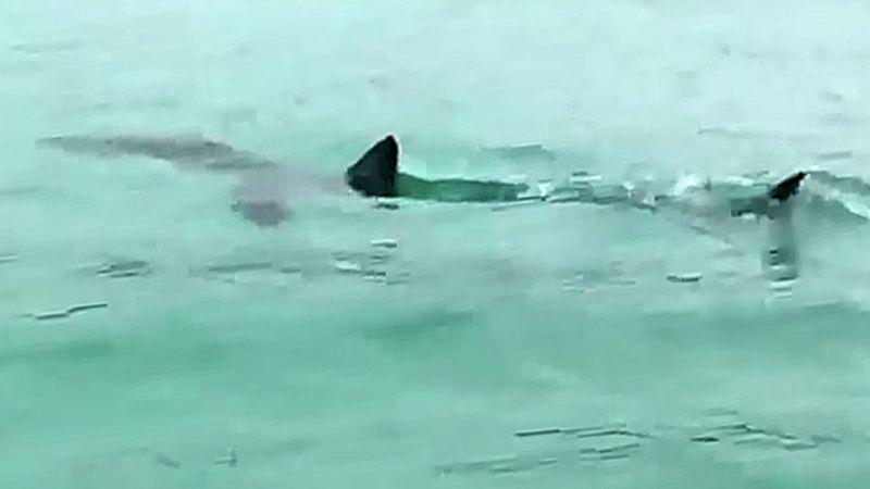 魂要被嚇掉了!去濟州島海水浴場一定要小心:真的有鯊魚出沒!