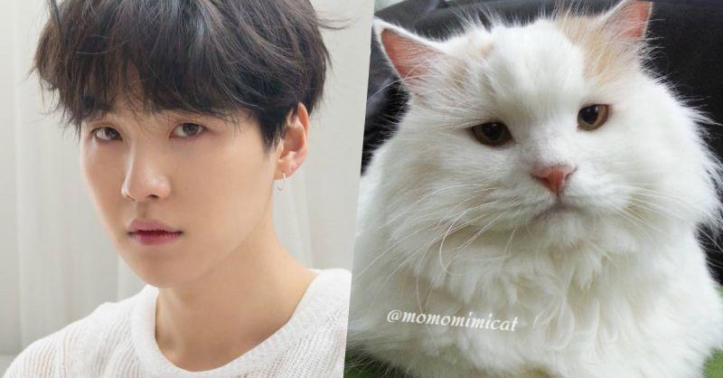 哪一隻才是最像BTS防彈少年團SUGA的貓貓?